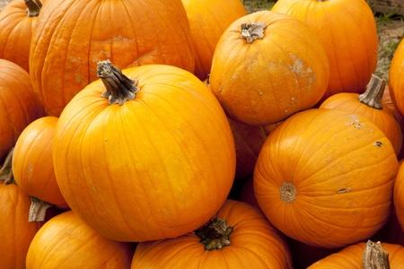 horizontal format horizontal: A large pile of Thanksgiving or Halloween pumpkins in the horizontal format.
