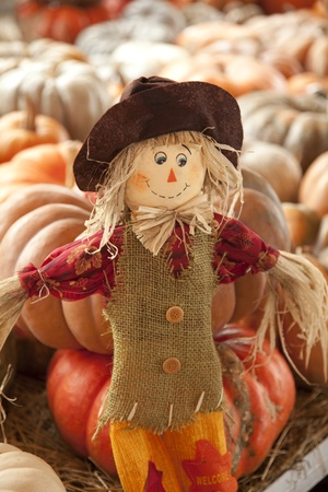 A thanksgiving doll or scarecrow in a fall setting of pumpkins with the horizontal format.