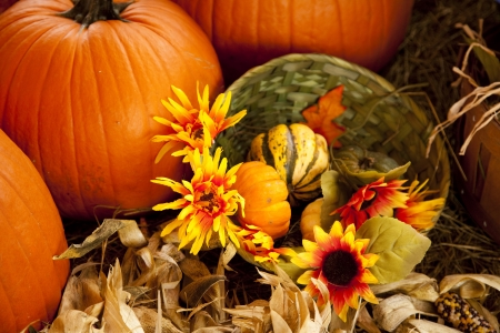 A thanksgiving or fall setting of pumpkins and flowers in the horizontal format. Imagens