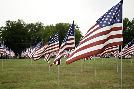 A field of United States Flags flying in the breeze. Stok Fotoğraf