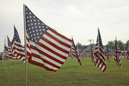 horizontal format horizontal: A field of United States Flags flying in the breeze in a horizontal format. Stock Photo