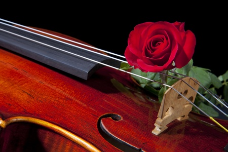 violins: An expensive violin viola isolated on black with a red rose on the bridge.