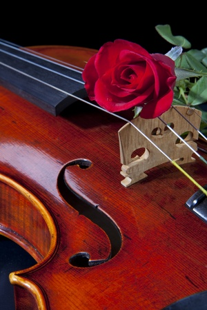 An expensive violin viola isolated on black with a red rose on the bridge. photo
