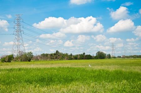 Red eléctrica de los postes en el cielo azul y el verde campo de arroz