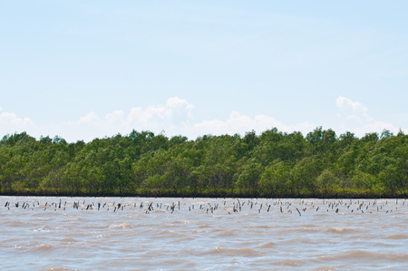Mangrove forest view in thailand photo
