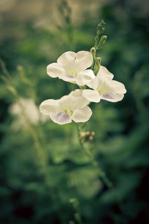 filtered: Flores blancas filtradas retro