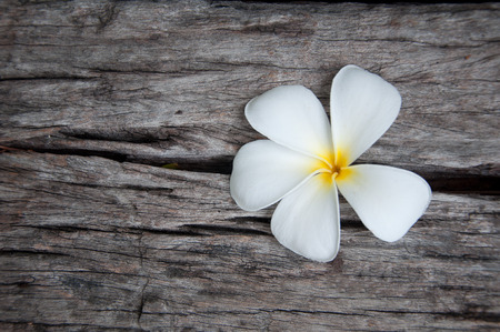 White frangipani (plumeria) flower on the old wood background, Thailand photo