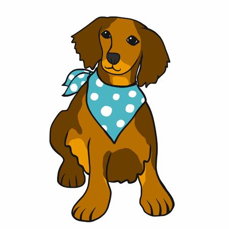 Brown long hair dachshund wear blue scarf cartoon vector illustration Иллюстрация