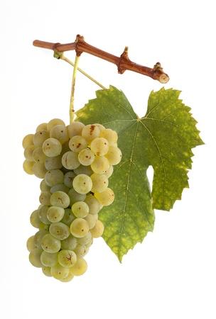 Les raisins blancs sur une branche avec des feuilles et le fond blanc