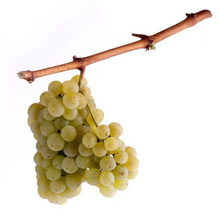white grapes on the border with a white background