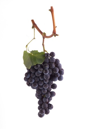 Pinot Noir grapes on a branch with leaf and white background