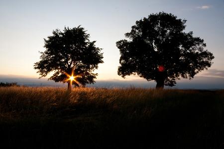 darkwood: Magical sunrise with tree