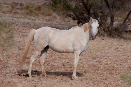 australian outback: Group of Wild horses in the Australian outback Stock Photo