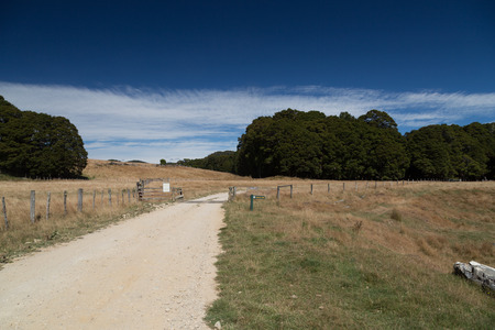 Road through a dry meadow, farm