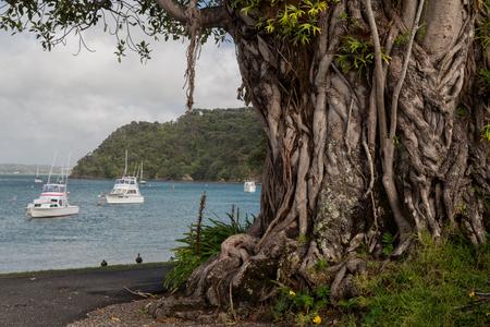 Kororareka Bay on an sunny day 版權商用圖片 - 44419732