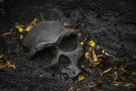 Human Skull Stock Photo - 18366043