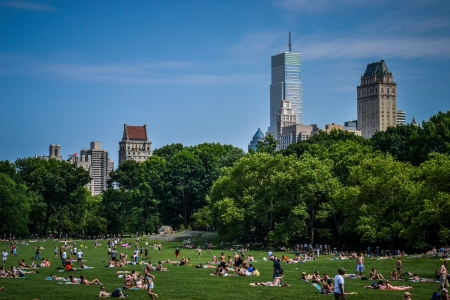 central park: Sunbathers in New York City s Central Park in July