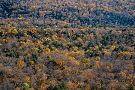 Fall colors as far as the eye can see in the Porcupine Mountains wilderness State Park in Michigan at Lake of the Clouds