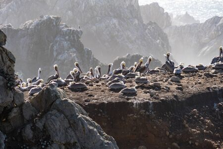 Bird Rock in Point Lobos State Reserve Park in Monterey California on a sunny, yet hazy day. Birds such as pelicans and seagulls mate and nest here