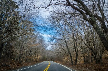 Tunnel of bare trees on US Highway 6, going to Provincetown, Cape Cod, Massachusetts in the springtime