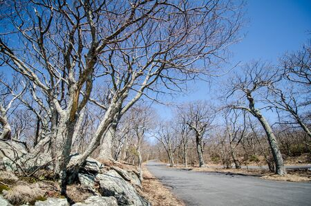 Bare trees along Skyline Drive in Shenandoah National Park in Virginia during early spring on a sunny day