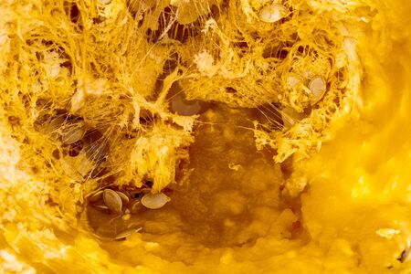 Close up macro of the inner flesh, guts and seeds of a pumpkin