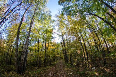 Fisheye view of trees with fall colors in Banning State Park in Sandstone Minnesota Stock fotó
