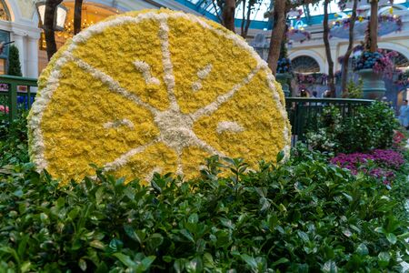 LAS VEGAS NEVADA - JULY 9 2018 : Summer flower season in Bellagio Hotel Conservatory & Botanical Gardens in Las Vegas features a wine picnic. There are several seasonal themes that the Conservatory changes throughout the year.