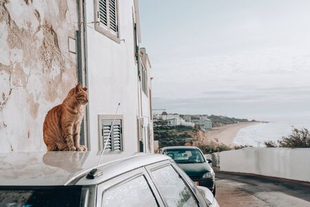 Cat sits on the top of a car rooftop overlooking the Algarve region of Portugal in Albuferia