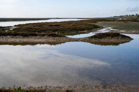 The swamp and wetlands near Barril Beach in Tavira Portugal 版權商用圖片