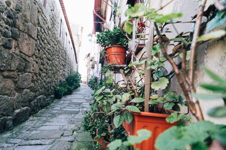 Narrow cobblestone alley in Porto, Portugal with potted plants and cute doorways with selective focus on plants
