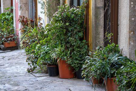Potted plants sitting outside residential doorways in Porto, Portugal 版權商用圖片