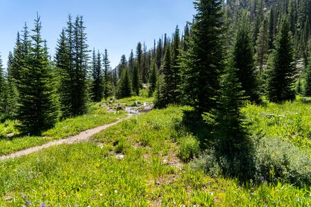 Beautiful scenery along a dirt hiking trail (Iron Creek Trail) leading to Sawtooth Lake in Idaho