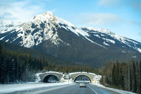 Animal crossing bridge along the Trans Canada Highway (Highway 1) in Banff National Park in winter Banque d'images