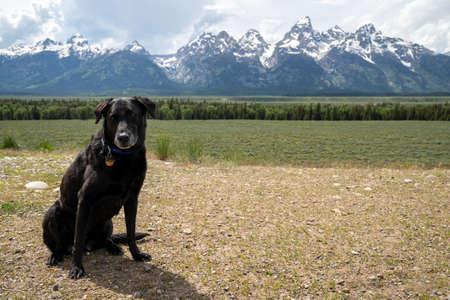 Black labrador retriever dog sits in the mountains in Grand Teton National Park Banco de Imagens