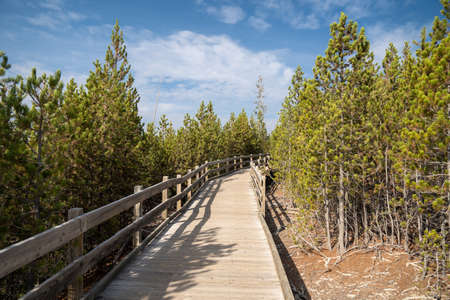 The boardwalk trail leading to Steamboat Geyser, the worlds largest geyser, in Yellowstone National Park