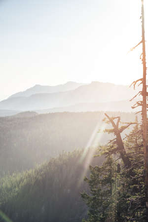 Sunset view of Mount Rainier National Park with silhouettes of the Cascade range and trees