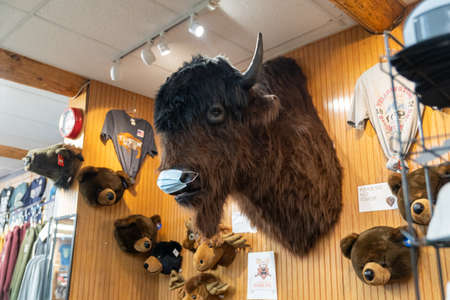 West Yellowstone, Montana - September 23, 2020: A talking bison on a wall in a gift shop wears a face mask, due to COVID-19 pandemic 新聞圖片
