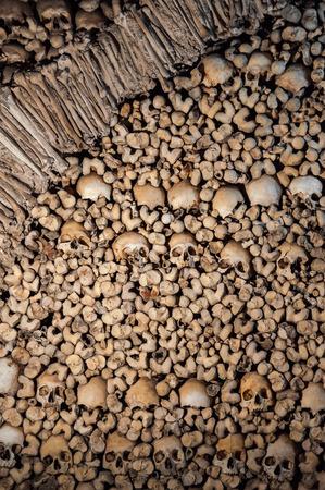 human bones: Background made of human bones and skulls Stock Photo