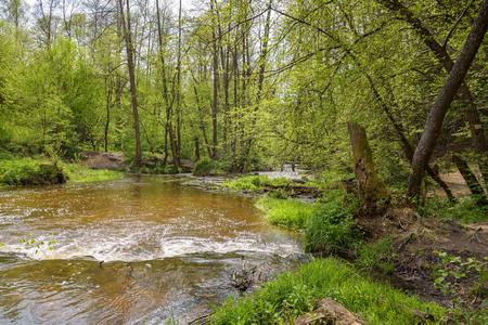 Vista de las cascadas en el río Tanew en la reserva natural de Nad Tanwia en el este de Polonia