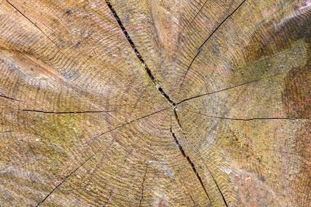 Natural background or texture made of cut tree trunk