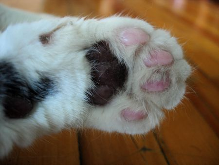 Cats Paw