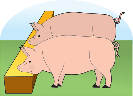 Two Large Pigs eating at a trough Vector