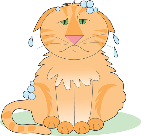 miserable: A marmalade cat thats not happy about having a bath Illustration