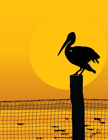 Black silhouette of a pelican against a sunrisesunset