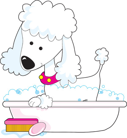 A cute poodle is getting a bath Çizim
