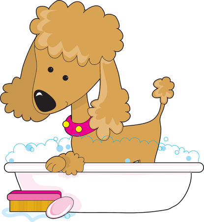 grooming: A  cute apricot poodle in a bath tub