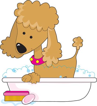 Een grappig apricot poodle in een bad bad Stock Illustratie