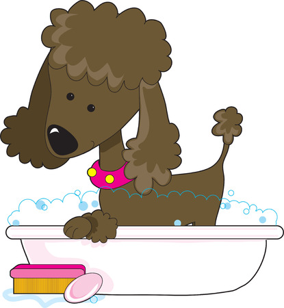 dog grooming: A cute brown poodle in a bath tub