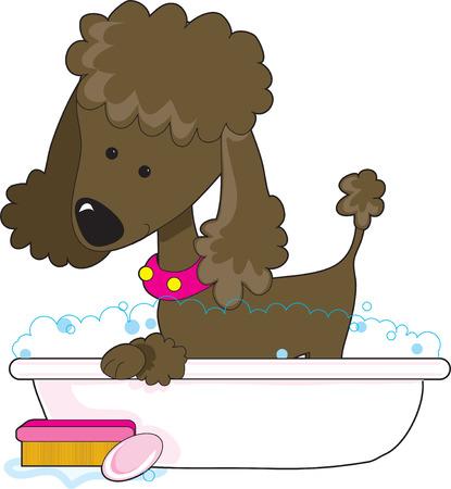 hair wash: A cute brown poodle in a bath tub